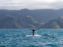 Reizen in Nieuw Zeeland georganiseerd door Reisregisseur