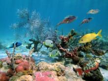 prachtige onderwaterwereld