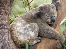 Reizen in Australie georganiseerd door Reisregisseur