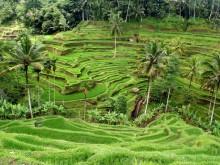 Reisregisseur - Bali