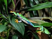 Reisregisseur - Costa Rica