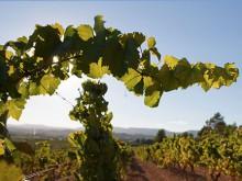 Reisregisseur - Barcelona - wijngaard Jean Leon