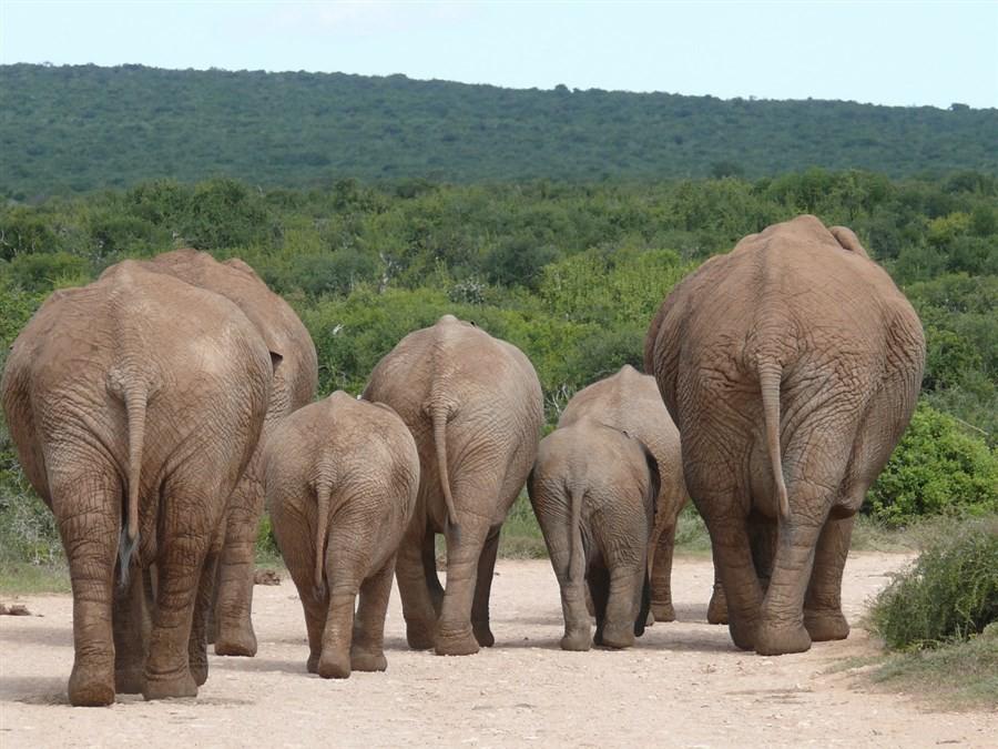 Zuid Afrika - olifanten